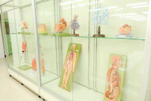 解剖模型の展示(2)